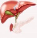 Le foie : phase hépatique et biliaire